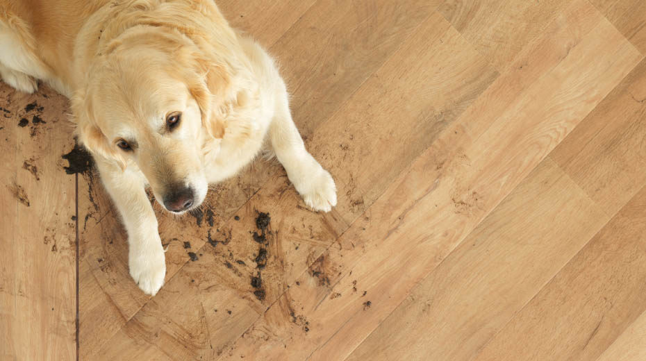Karndean LVT flooring is pet-friendly and easy to clean - shop Karndean at Flooring 4 You Ltd, Cheshire